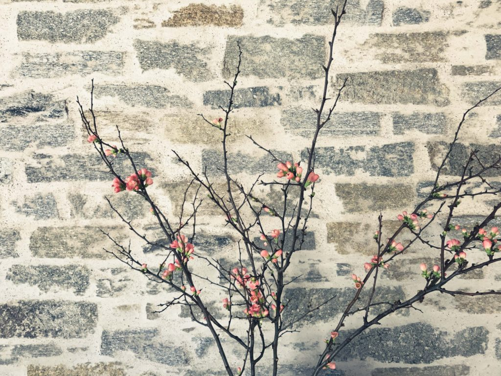 Demo vor Natursteinmauer