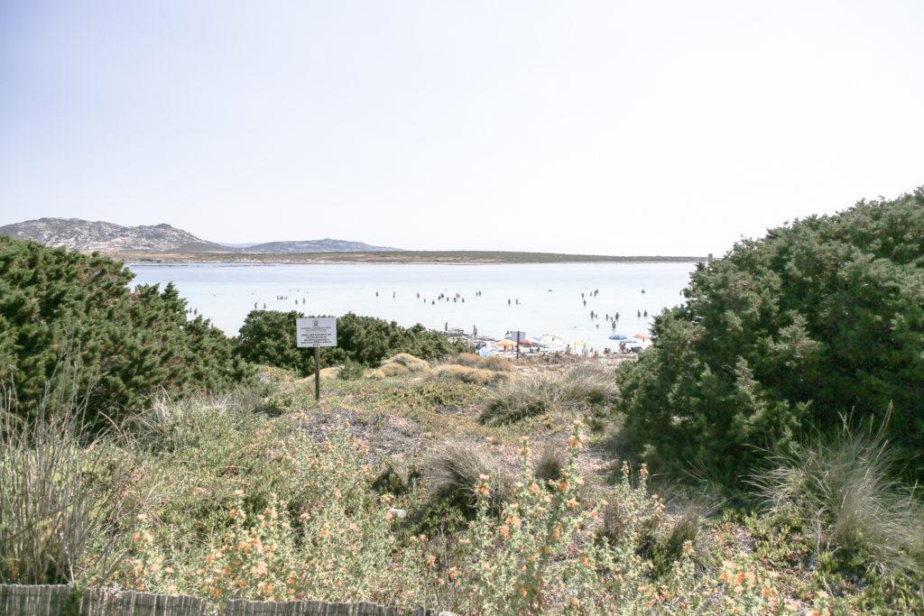 Blick auf den Spiaggia del pelosa in Stintino